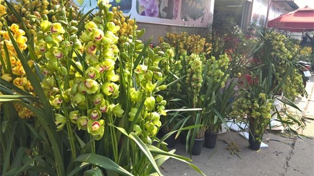 Ngoài địa lan vàng, rất nhiều loại địa lan xanh, giá siêu rẻ xuất xứ từ Trung Quốc cũng được bày bán đồng giá