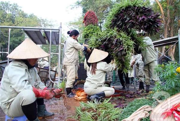 Người Hà Nội sắp được chiêm ngưỡng 12 con giáp bằng cây và hoa thật dịp Tết - Ảnh 12.