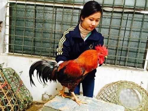 Nuôi gà cổ cả làng thu tiền tỷ, bán trứng gà đua nhau tậu Camry