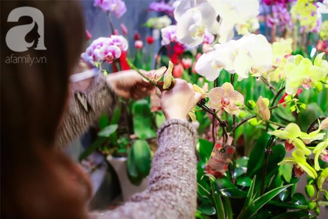 Hà Nội: Chi 72 triệu để mua hoa tươi nhập khẩu đủ tiêu chí độc và đẹp về chơi Tết - Ảnh 10.