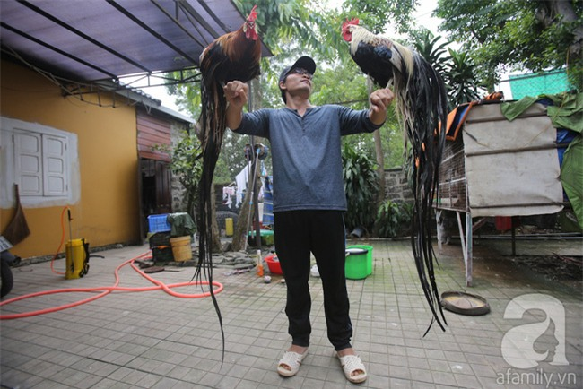 Đầu năm Dậu, cận cảnh những chú gà độc đáo, giá siêu đắt được săn lùng trong Tết này - Ảnh 1.
