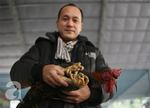 Đầu năm Dậu, cận cảnh những chú gà độc đáo, giá siêu đắt được săn lùng trong Tết này - Ảnh 14.