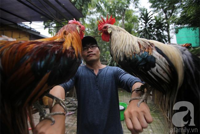 Đầu năm Dậu, cận cảnh những chú gà độc đáo, giá siêu đắt được săn lùng trong Tết này - Ảnh 3.