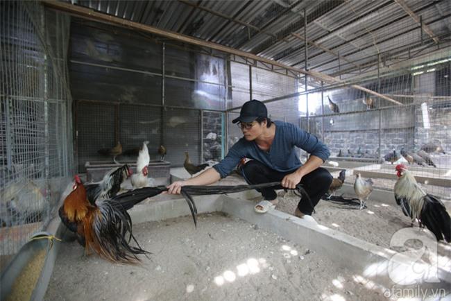 Đầu năm Dậu, cận cảnh những chú gà độc đáo, giá siêu đắt được săn lùng trong Tết này - Ảnh 5.