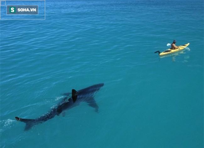 15 bức ảnh chắc chắn sẽ khiến bạn suy nghĩ kỹ hơn trước khi đi bơi - Ảnh 1.