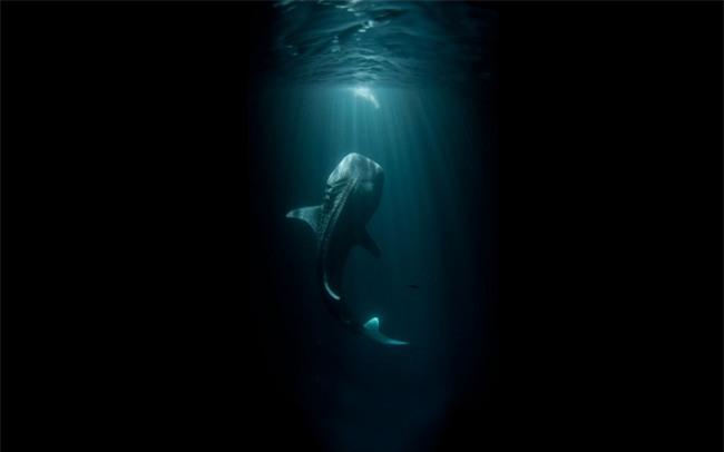 15 bức ảnh chắc chắn sẽ khiến bạn suy nghĩ kỹ hơn trước khi đi bơi - Ảnh 3.