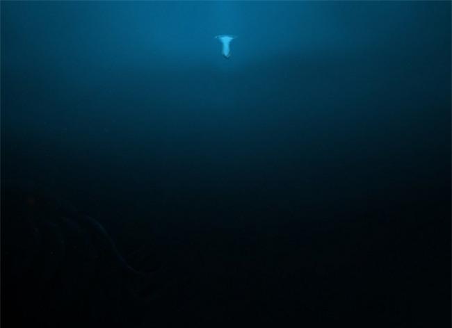 15 bức ảnh chắc chắn sẽ khiến bạn suy nghĩ kỹ hơn trước khi đi bơi - Ảnh 6.