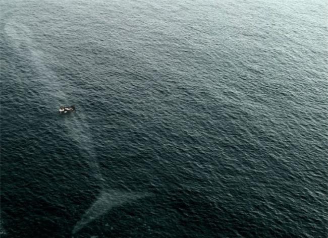 15 bức ảnh chắc chắn sẽ khiến bạn suy nghĩ kỹ hơn trước khi đi bơi - Ảnh 7.