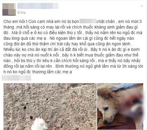 Xót xa hình ảnh chú chó 3 tháng tuổi đau đớn vì đứt lìa một chân, nghi bị trộm chém - Ảnh 1.