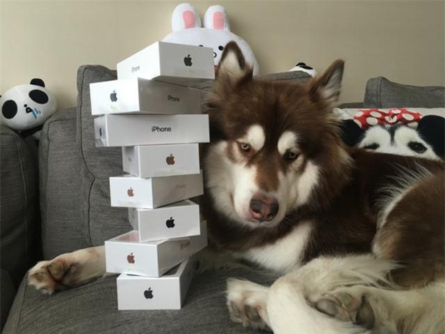 Chú chó Coco và 8 chiếc iPhone 7 được tặng