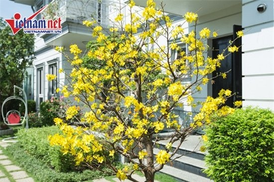 Thăm nhà đẹp phong cách hoàng gia của Hồ Quỳnh Hương - Ảnh 4.