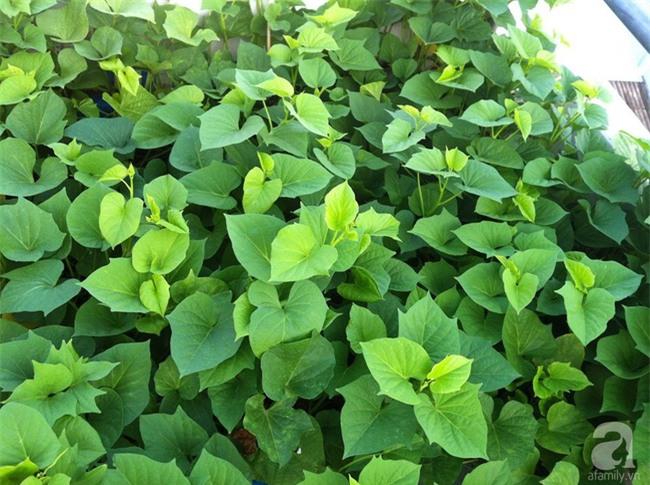 Chỉ với 5 triệu đồng, cô giáo trẻ ở Sài Gòn đã có 1 khu vườn trồng hoa và rau rất xinh xắn - Ảnh 17.