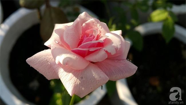 Chỉ với 5 triệu đồng, cô giáo trẻ ở Sài Gòn đã có 1 khu vườn trồng hoa và rau rất xinh xắn - Ảnh 25.