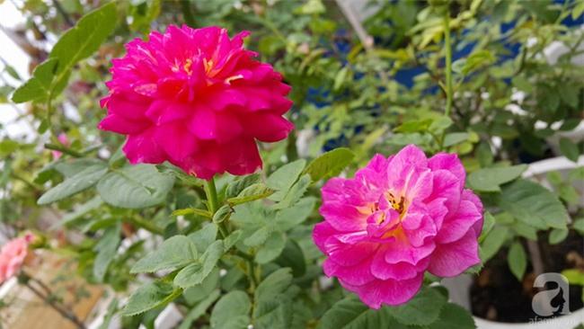 Chỉ với 5 triệu đồng, cô giáo trẻ ở Sài Gòn đã có 1 khu vườn trồng hoa và rau rất xinh xắn - Ảnh 26.