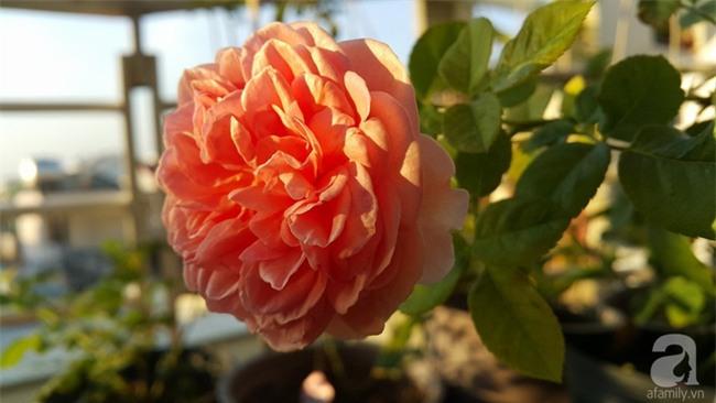 Chỉ với 5 triệu đồng, cô giáo trẻ ở Sài Gòn đã có 1 khu vườn trồng hoa và rau rất xinh xắn - Ảnh 27.