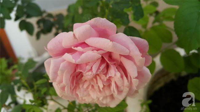 Chỉ với 5 triệu đồng, cô giáo trẻ ở Sài Gòn đã có 1 khu vườn trồng hoa và rau rất xinh xắn - Ảnh 28.