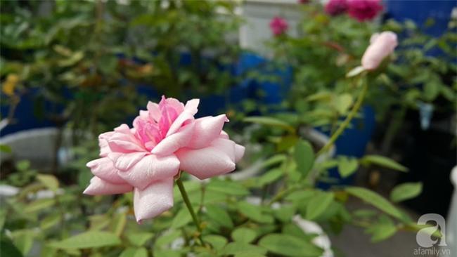 Chỉ với 5 triệu đồng, cô giáo trẻ ở Sài Gòn đã có 1 khu vườn trồng hoa và rau rất xinh xắn - Ảnh 29.