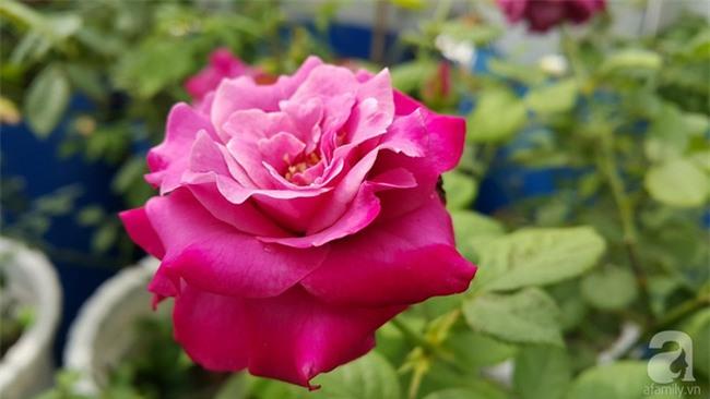 Chỉ với 5 triệu đồng, cô giáo trẻ ở Sài Gòn đã có 1 khu vườn trồng hoa và rau rất xinh xắn - Ảnh 30.