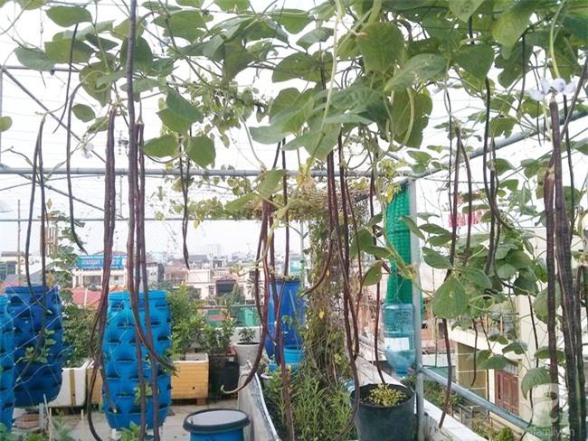 Chỉ với 5 triệu đồng, cô giáo trẻ ở Sài Gòn đã có 1 khu vườn trồng hoa và rau rất xinh xắn - Ảnh 4.