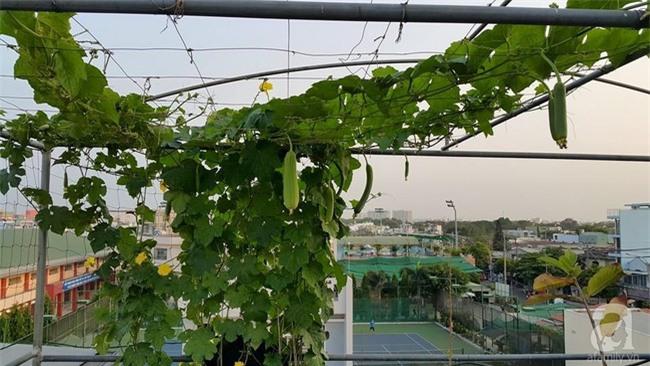 Chỉ với 5 triệu đồng, cô giáo trẻ ở Sài Gòn đã có 1 khu vườn trồng hoa và rau rất xinh xắn - Ảnh 5.