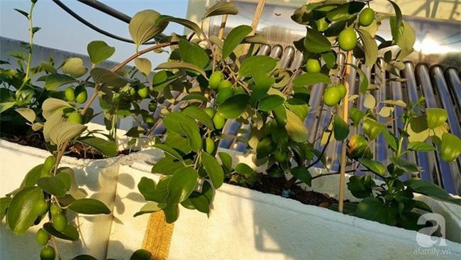 Chỉ với 5 triệu đồng, cô giáo trẻ ở Sài Gòn đã có 1 khu vườn trồng hoa và rau rất xinh xắn - Ảnh 6.