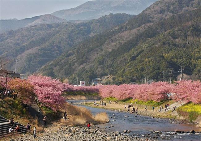 8.000 cây anh đào nở rộ ở Nhật - Ảnh 8.