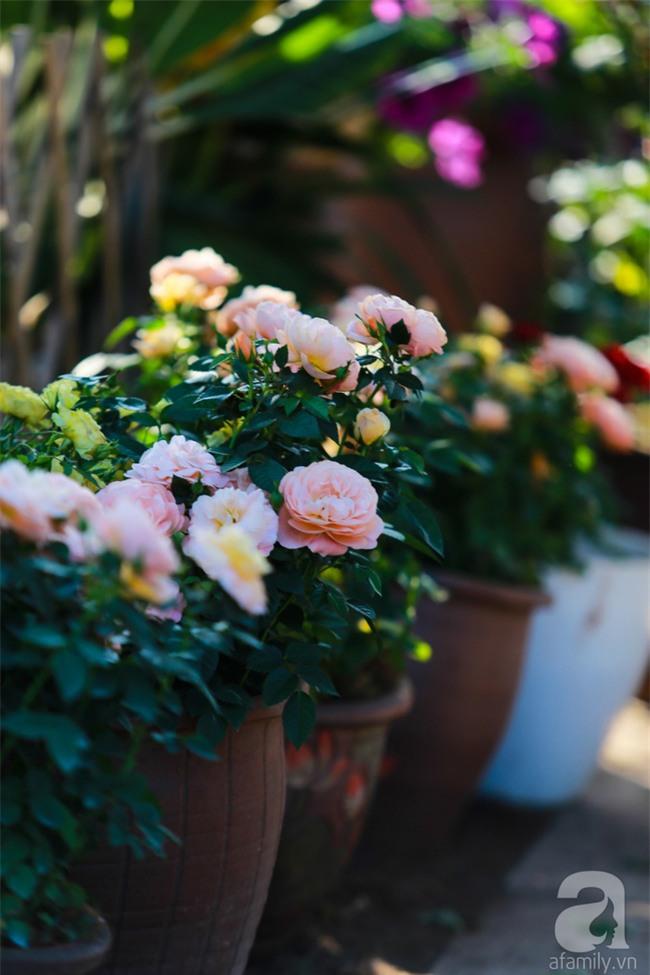 Lạc lối giữa vườn hồng rộng đến 5000m² của cô gái 9x ở Hà Nội - Ảnh 10.