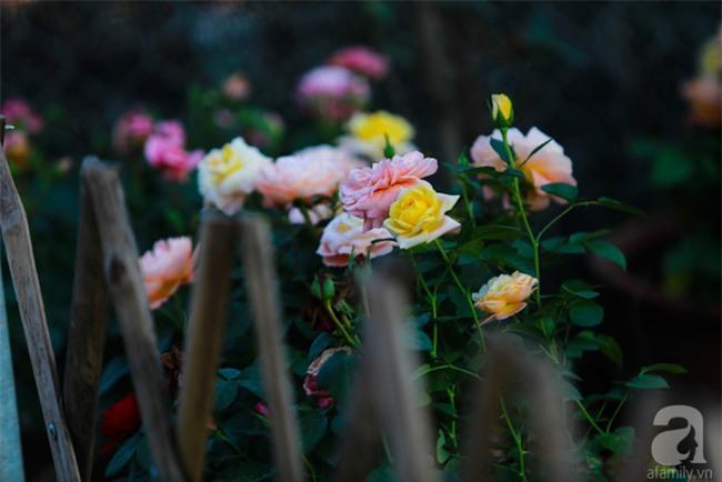 Lạc lối giữa vườn hồng rộng đến 5000m² của cô gái 9x ở Hà Nội - Ảnh 11.