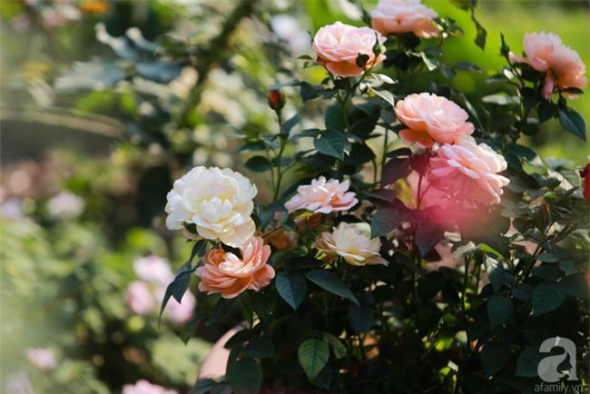 Lạc lối giữa vườn hồng rộng đến 5000m² của cô gái 9x ở Hà Nội - Ảnh 12.