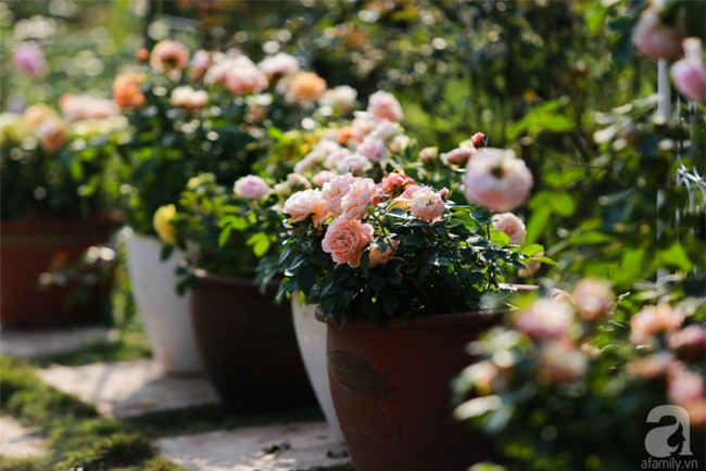 Lạc lối giữa vườn hồng rộng đến 5000m² của cô gái 9x ở Hà Nội - Ảnh 14.