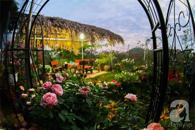 Lạc lối giữa vườn hồng rộng đến 5000m² của cô gái 9x ở Hà Nội - Ảnh 18.
