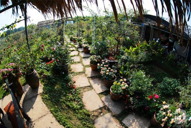 Lạc lối giữa vườn hồng rộng đến 5000m² của cô gái 9x ở Hà Nội - Ảnh 2.