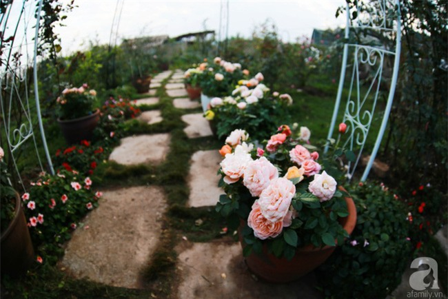 Lạc lối giữa vườn hồng rộng đến 5000m² của cô gái 9x ở Hà Nội - Ảnh 3.