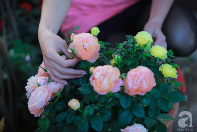 Lạc lối giữa vườn hồng rộng đến 5000m² của cô gái 9x ở Hà Nội - Ảnh 4.
