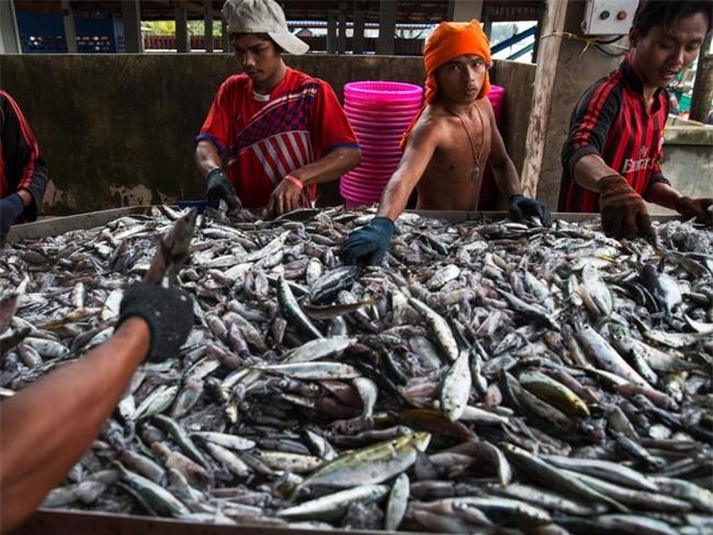 Tin sốc: 1/5 số hải sản trong sushi trên thế giới không phải là hàng thật - Ảnh 3.