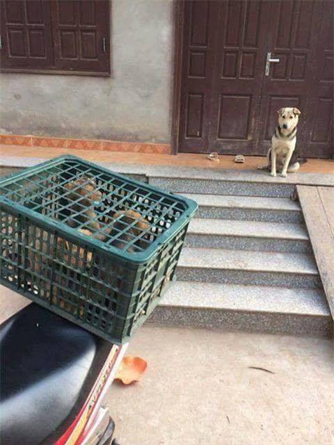 Ánh mắt của chó mẹ khi đàn con bị đem bán ám ảnh dân mạng - Ảnh 1.