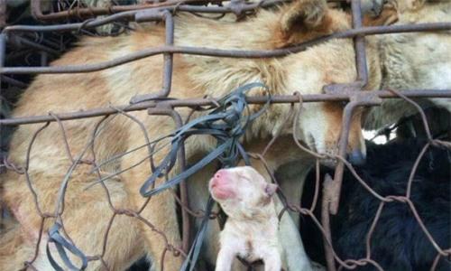 Ánh mắt của chó mẹ khi đàn con bị đem bán ám ảnh dân mạng - Ảnh 3.