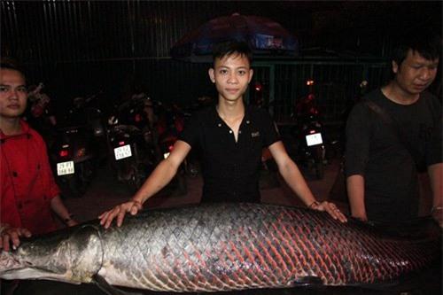 Cá hải tượng, Hà Nội, nhà hàng, cá khủng, thủy quái, dân nhậu