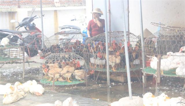 Nhiều chợ dân sinh tại Hà Nội, gà vịt vẫn được nhốt, giết thịt bình thường như chưa có cảnh báo dịch cúm. Ảnh: H.Phương