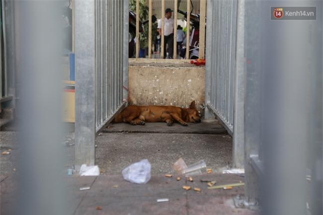 Chóng mặt vì đi bộ trên vỉa hè bị rào chắn như mê cung ở bệnh viện Chợ Rẫy Sài Gòn - Ảnh 13.