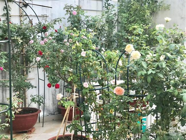 Vẻ quyến rũ của hàng trăm loài hoa hồng quý trên sân thượng 50m² của chàng trai độc thân 8x ở Vũng Tàu - Ảnh 12.