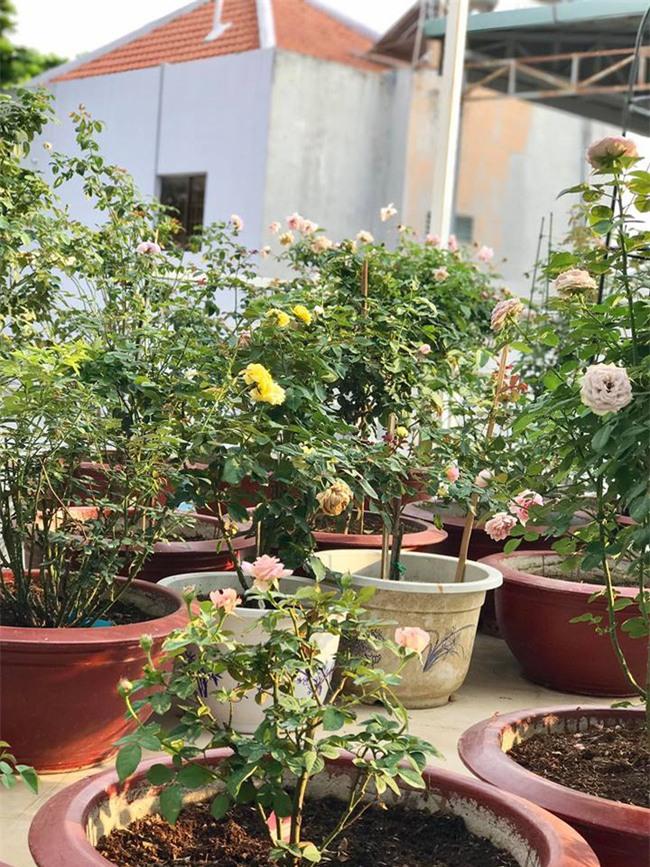 Vẻ quyến rũ của hàng trăm loài hoa hồng quý trên sân thượng 50m² của chàng trai độc thân 8x ở Vũng Tàu - Ảnh 23.
