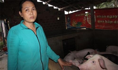 nông dân, thương lái, hàng Tàu, Trung Quốc, thương lái Trung Quốc , thịt lợn, nuôi heo