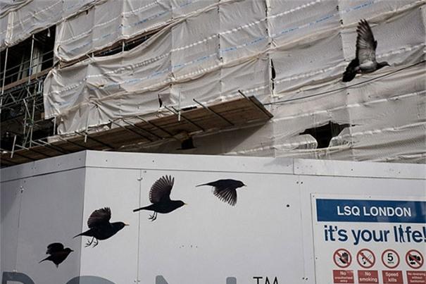 Thật ra thì còn một con nữa mà nó lỡ bay nhầm hướng đâm thủng tường rồi.