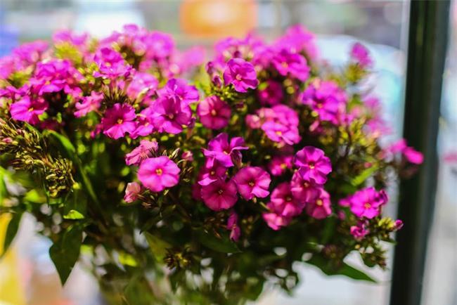 Ngắm loạt hoa nhập khẩu độc, đẹp khiến quý ông không tiếc tiền chi hẳn trăm triệu tặng vợ dịp 8/3 - Ảnh 18.