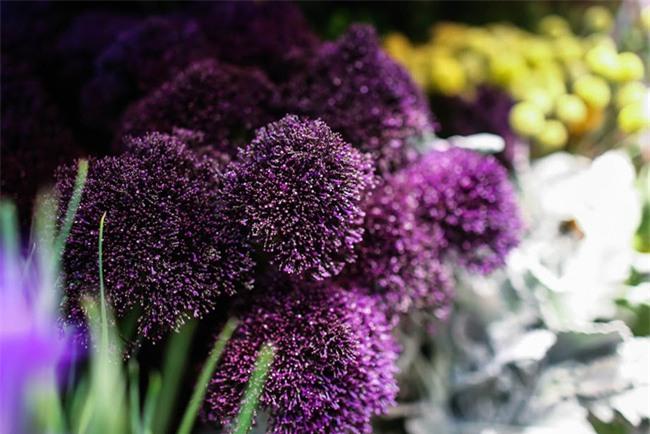 Ngắm loạt hoa nhập khẩu độc, đẹp khiến quý ông không tiếc tiền chi hẳn trăm triệu tặng vợ dịp 8/3 - Ảnh 21.