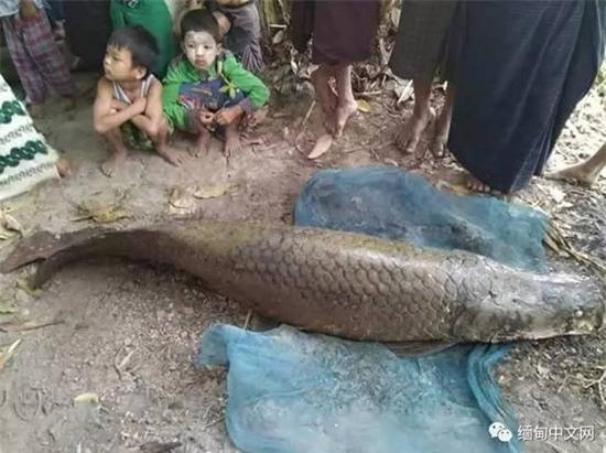 cá lạ, cá rồng, cá hải tượng, ngư dân, nông dân, bắt được, cá khủng, cá sủ vàng