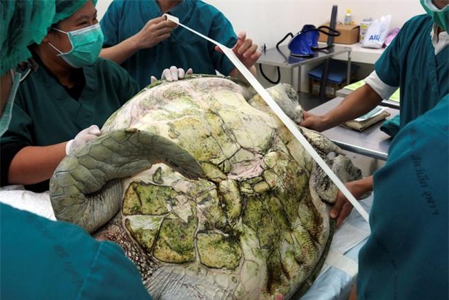Video: Người dân thả tiền cầu may, chú rùa suýt chết vì nuốt phải gần 1.000 đồng xu - Ảnh 2.