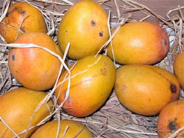 Vua của trái cây giúp phòng ung thư và bệnh tim: Loại quả dễ mua bạn nên ăn hàng ngày - Ảnh 1.