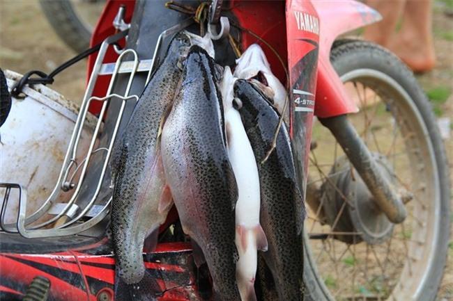 cá hồi, nuôi cá hồi, cá hồi Sa Pa, cá hồi Mẫu Sơn
